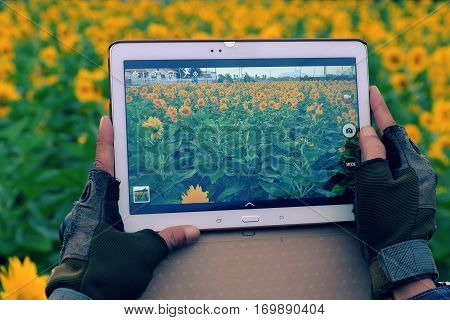 Man Hand Take Photo By Tablet At Sunflower Field