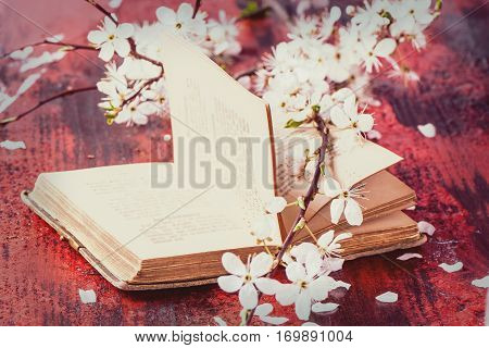 Vintage Bible With Blossom Branch