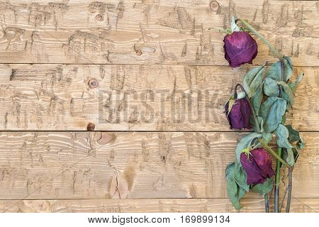 Wilted beautiful roses on a rustic table. Concept of holiday memories. Top view.