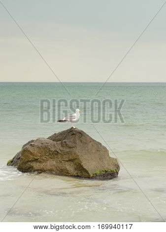 Seascape seagull on a rock in the ocean