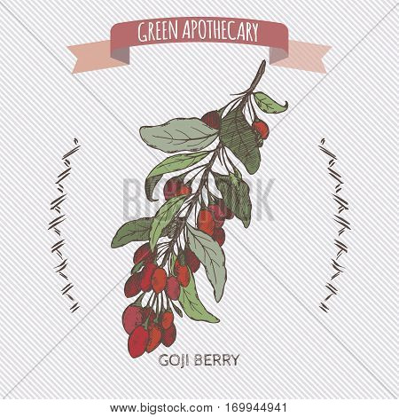 Color Lycium barbarum aka Goji berry sketch. Green apothecary series. Great for traditional medicine or gardening.