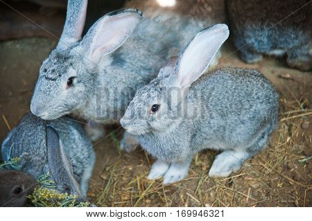 Rabbits on animal farm in rabbit-hutch. Agriculture
