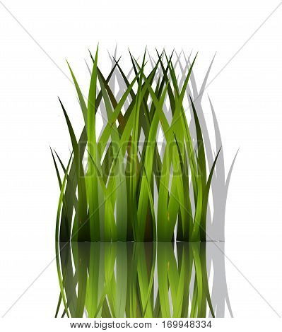 grass vector background, focus, growth, rural, lush, nature, environment, length
