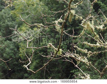 Trees in the Island of La Palma
