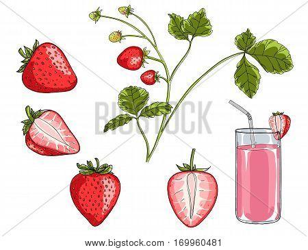 strawberry plant hand drawn vector set art illustration