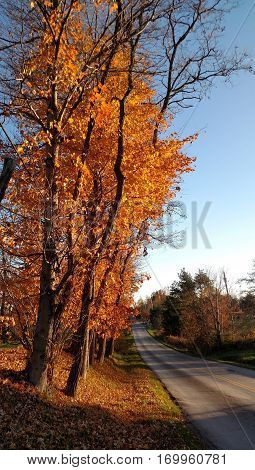 Orange maple trees along a quiet empty country road on a beautiful Autumn day
