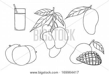 Vector Mango Set Hand Drawn Cute Line Art Illustration