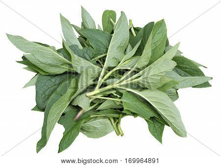 comfrey chatrooms I continued to treat her with my home remedies,  shasta suddenly got up and walked to my husband in the living room  comfrey herbal extract, .