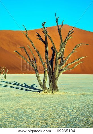The bottom of dried lake Deadvlei, with dry trees. Ecotourism in Namib-Naukluft National Park, Namibia. Evening, sunset
