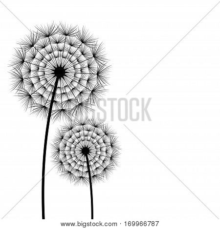 Two stylized black dandelions fluff on white background. Floral stylish trendy wallpaper with summer and spring flowers. Beautiful stylish nature backdrop place for text. Vector illustration