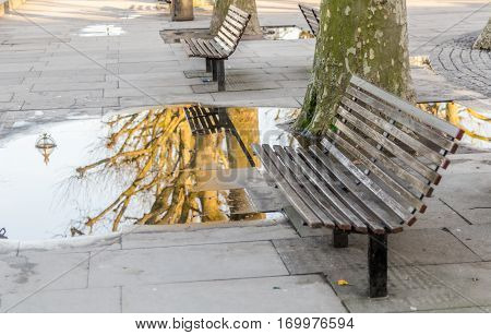 benches sidewalk puddle and reflected in the mirror of water tree sunny day in the city