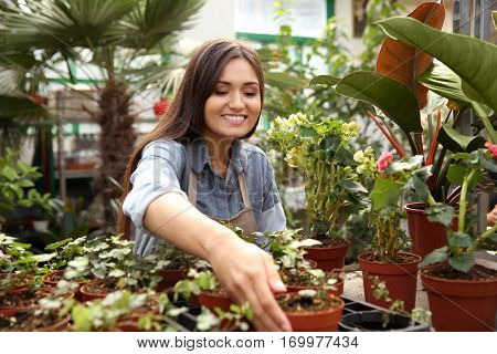 Pretty young florist looking after decorative plants in greenhouse