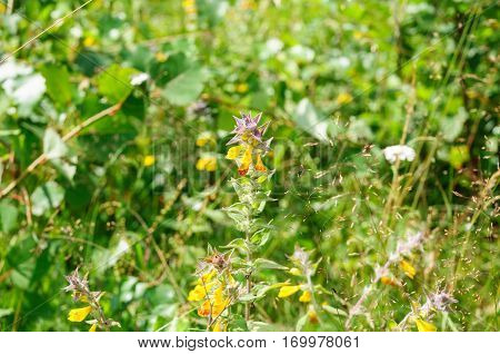 White camomiles and yellow small flowers on green grass lawn close up