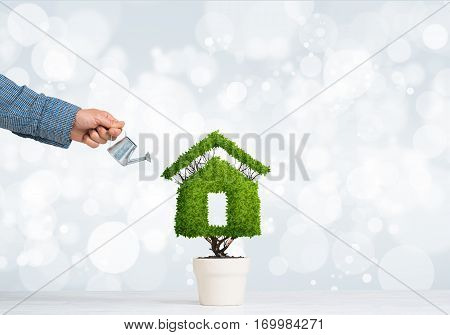Hand of man watering green plant in pot shaped like house