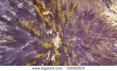 aerial view of a north american forest at fall 3d rendering