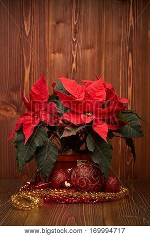 Christmas decoration with Red Poinsettia flowers (Euphorbia Pulcherrima), red balls and beads on wooden background.  New year and Christmas background with copy space. Greeting card.