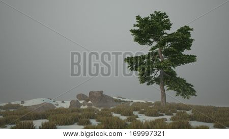 3d illustration of the lonely pinus strobus tree on snowy terrain