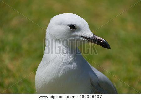 Sea bird with beautiful beak enjoying the sunny day