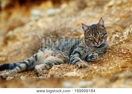 Cute cat, cat lying on the brick floor in the background blurred close up playful cats, cats, cats, cats relaxing vacation.