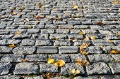 Grey pavement stone background. Autumn leaves on a pavement or walkway. Yellow leaves on the stone pavement. Autumn background. poster
