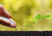 Agriculture. Plant seedling. Hand nurturing and watering young baby plants growing in germination sequence on fertile soil with natural green background poster