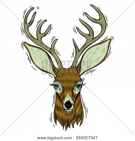 Hand Drawn Head Of Deer, Vectorial Isolated Elements Vector Illustration Henna Mandala Zentangle Sty