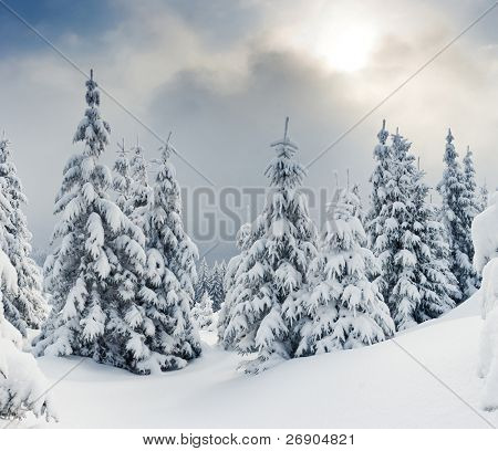 Trees covered with hoarfrost and snow in mountains.