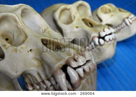 Bones_three_skulls_blue