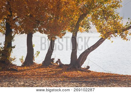 Autumn Forest Lake Landscape. Autumn Forest Lake Water Scene. Golden Autumn Forest Lake View