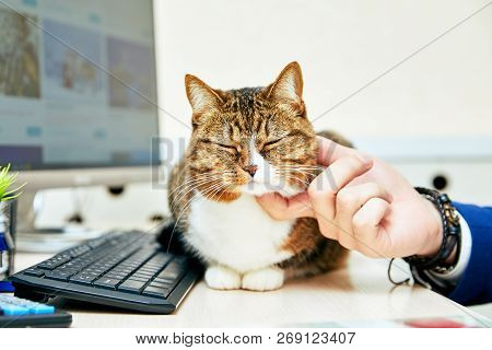 Funny Cat With In Office. Business Scene.