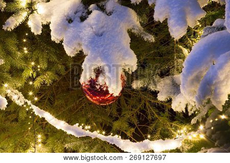 Snow Covered Pine Tree With Lighting And Red Glass Ball Christmas Ornament, Outdoor.