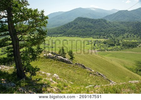 Coniferous Tree On Green Hill In Background Of Mountains. Rivers, Roads And Villages. Green Landscap