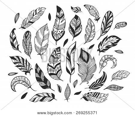 Hand Drawn Feathers. Sketch Bird Feather, Retro Artistic Drawing Ink Pen And Birds Feathering Vector