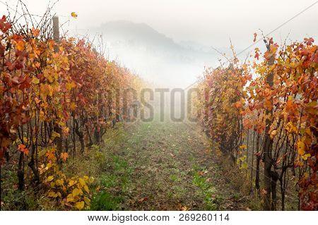 Famous Barolo Wine Region, Langhe, Piemonte, Italy