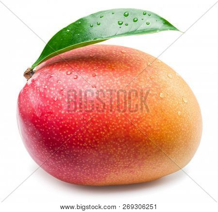 Mango fruit with water drops and mango leaf. Isolated on a white background.