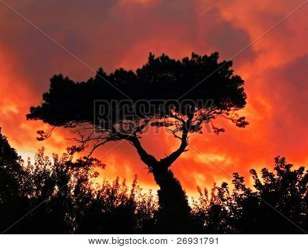 Tree in the fire