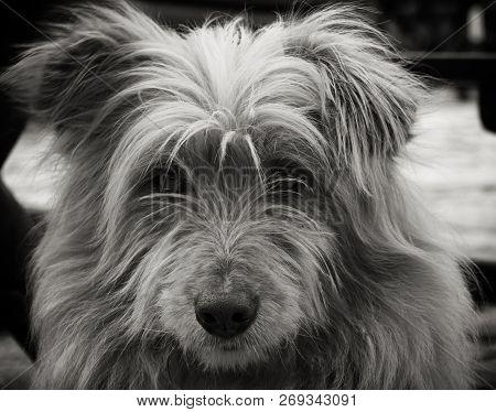 Portrait Of A Dog. Beautiful Dog Portrait. Close Up Pf A Dog. Dog Animal. Stray Dog Portrait. Beauti