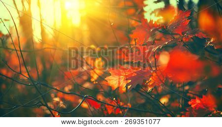 Autumn leaves background, backdrop. Landscape, Leaves swinging in a tree in autumnal Park. Fall. Oak trees with colourful bright in leaves Autumn colorful park