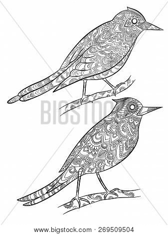 Birds Coloring Pages. Flying Wild Canary With Linear Floral Pattern On Their Body Vector Cartoon Ill