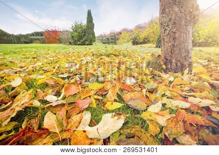 Autumn Leaves In Warm Colors On A Lawn In A Graden In The Fall