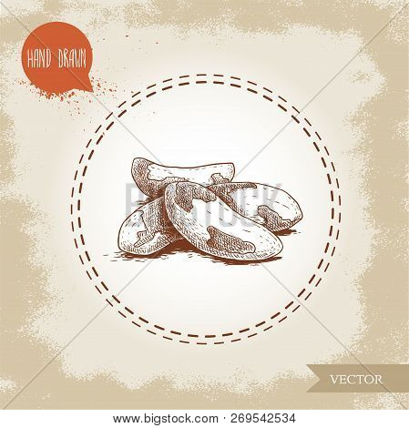 Brazilian Nuts Group. Sketch Style Hand Drawn Vector Illustration. Isolated On Old Background. Healt
