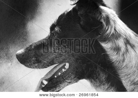 Abandoned dog with creased paper filtering