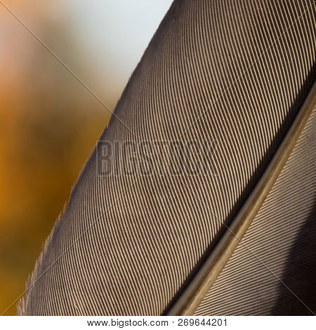 Beautiful feather of crow with rhythmic fibers poster