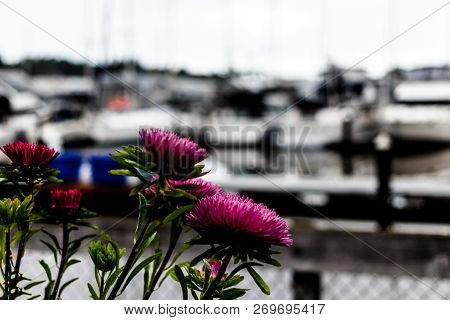 Purple Flowers And Green Stems In A Harbor With Boats