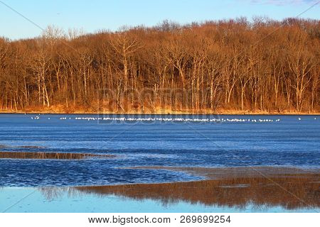Sunlit Shoreline At Clinton Lake State Recreation Area In Central Illinois