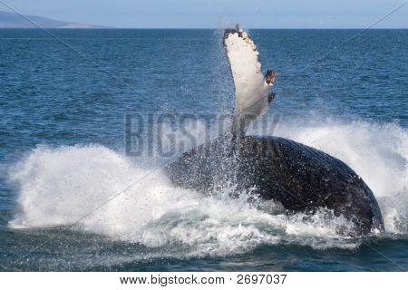 Whale Show
