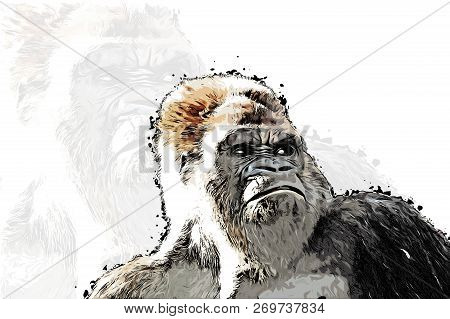 Outraged Gorilla Face Locking For Someone, Colorful Realistic Hand-drawn Sketch Style Isolated Vecto