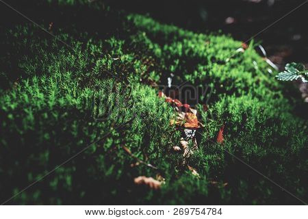 Photo Of Small Mushroom In The Forest On Green Moss.