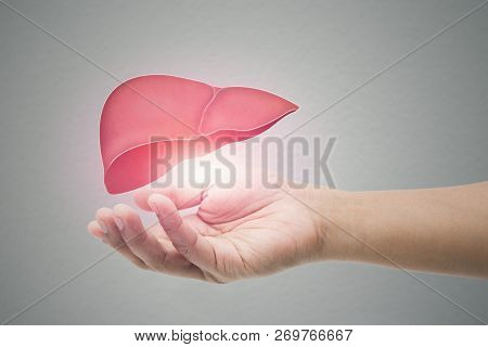 Man Holding Liver Illustration Against Gray Wall Background. Concept With Mental Health Protection A