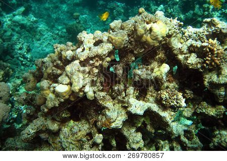Coral Reef In Red Sea. Fantastic Richness Of Forms Of Corals. Background